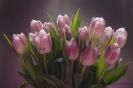 Тюльпаны для вас!