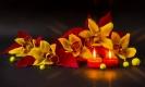 Рождественские орхидеи