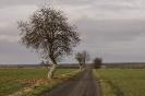 Яблоня и дорога