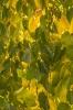 Ściana liści