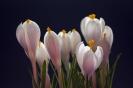 Dźwięki wiosny