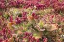 Różowe liście marca