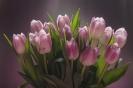 Tulipany dla Państwa!