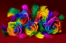 Różowa tęcza
