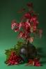 Czerwona zieleń
