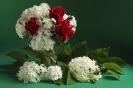 Czerwone róże w bialej hortnesji