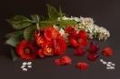 Czerwono-biała wiosna
