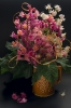 Kwitnące kasztany