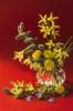 Marcowe kwiaty