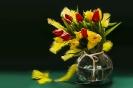 Styczniowe tulipany