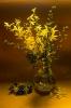Wiosna koloru złota