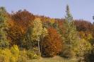 Barwy jesieni