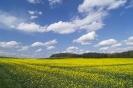 Żólte pole. Błękitne niebo