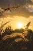 Słońce w trawie