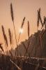 Trawa i słońce