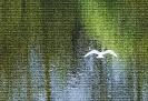 Biały samotny ptak