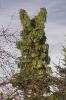 Zajączek na drzewie